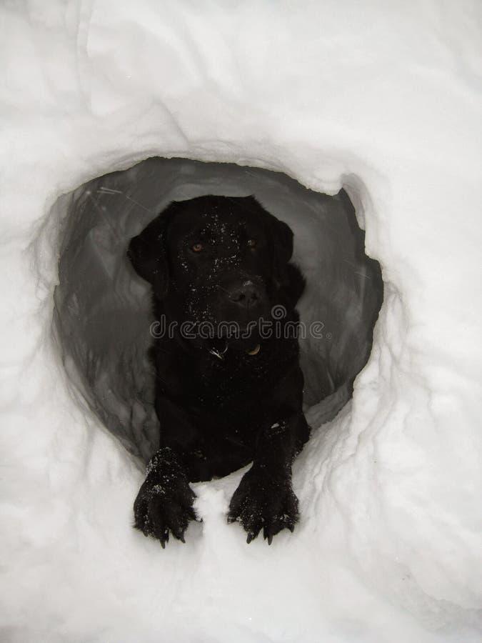 Hund i snögrotta royaltyfri fotografi