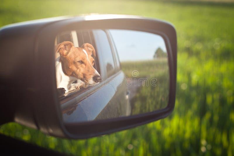 Hund i spegeln royaltyfria bilder