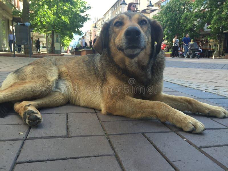 Hund i staden royaltyfria foton