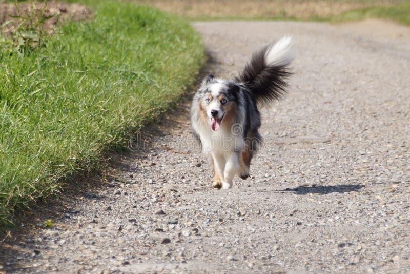 Hund i Tyskland arkivbilder