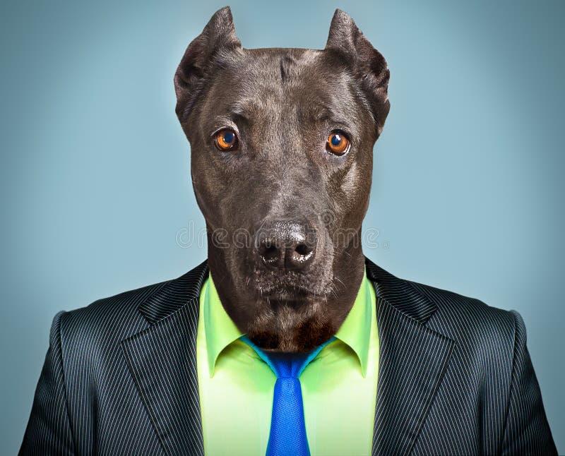 Hund im Anzug stockfoto