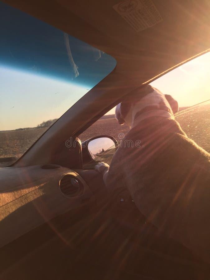 Hund im Fenster stockfoto