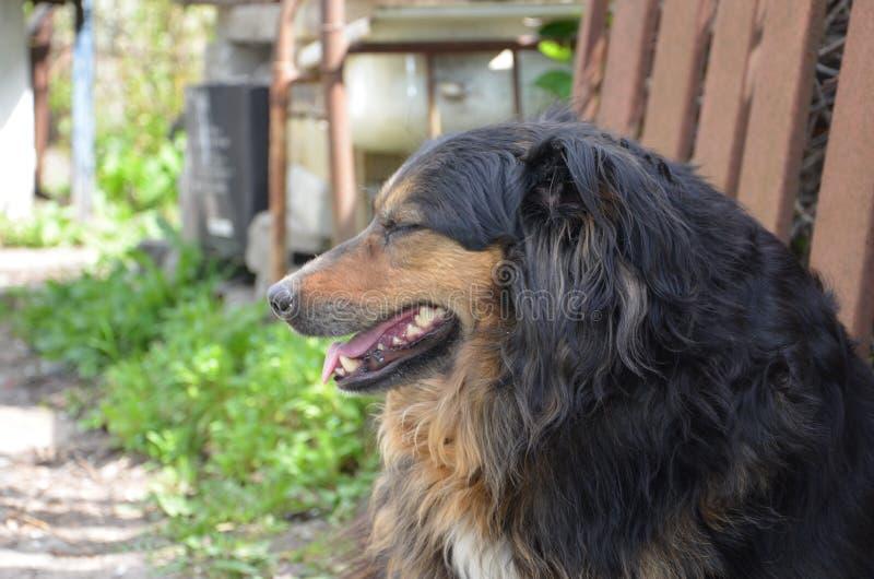 Hund im Freien stockbild
