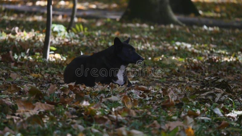 Hund im Herbstpark stockfotos