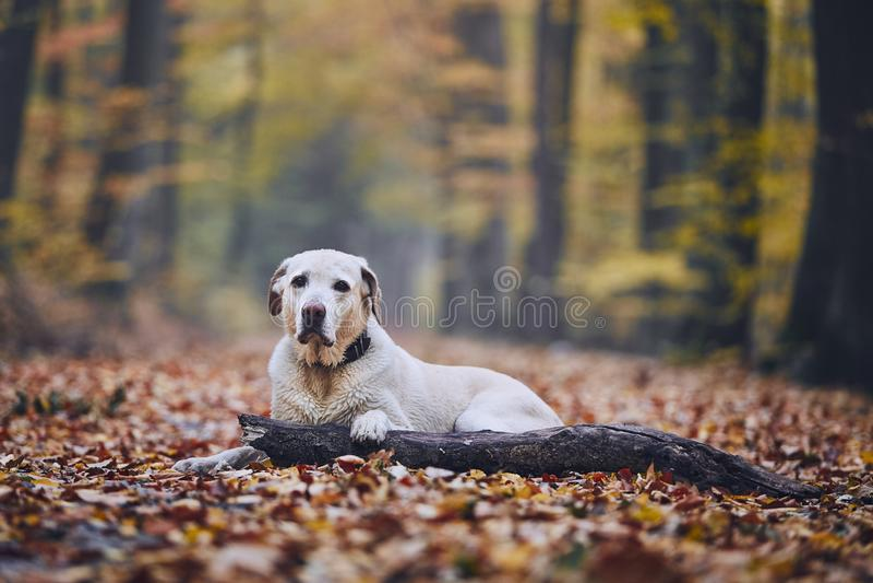 Hund im Herbstwald stockfoto