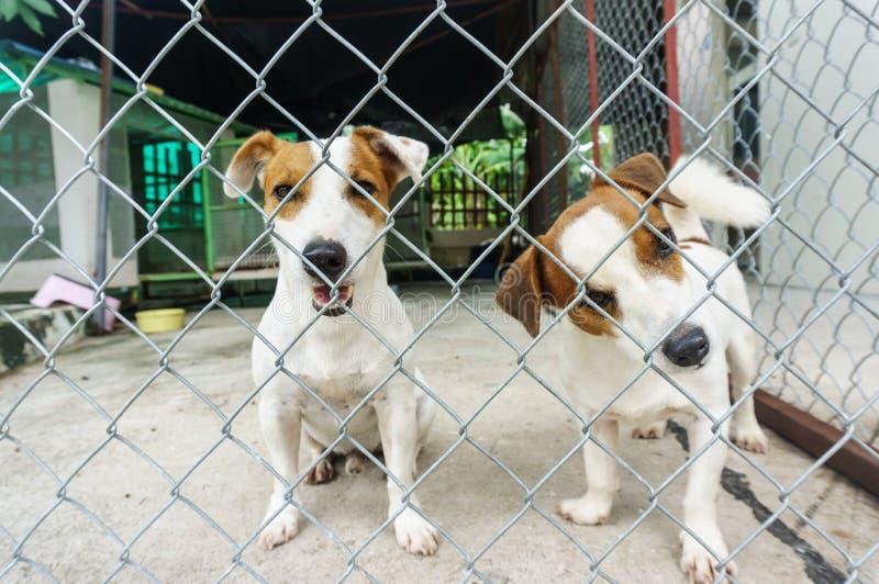 Hund im Käfig stockbilder
