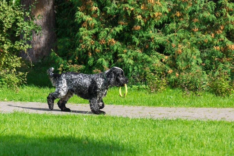 Hund im Park lizenzfreie stockfotografie