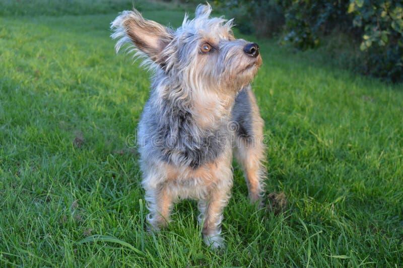 Hund im Park lizenzfreie stockbilder