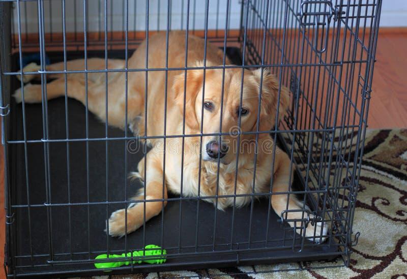 Hund im Rahmen für Haus-Training lizenzfreie stockbilder