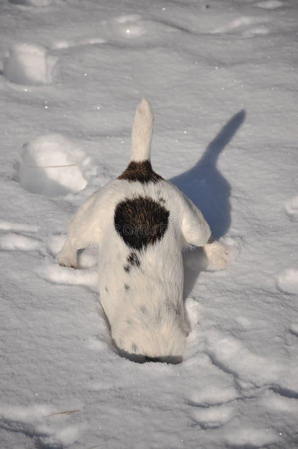 Hund im Schnee stockfotografie