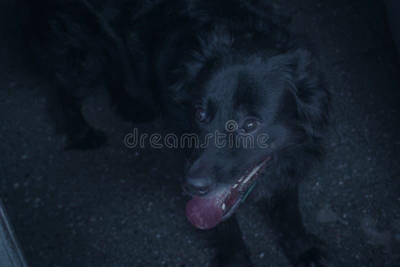 Hund im Schwarzen stockbilder