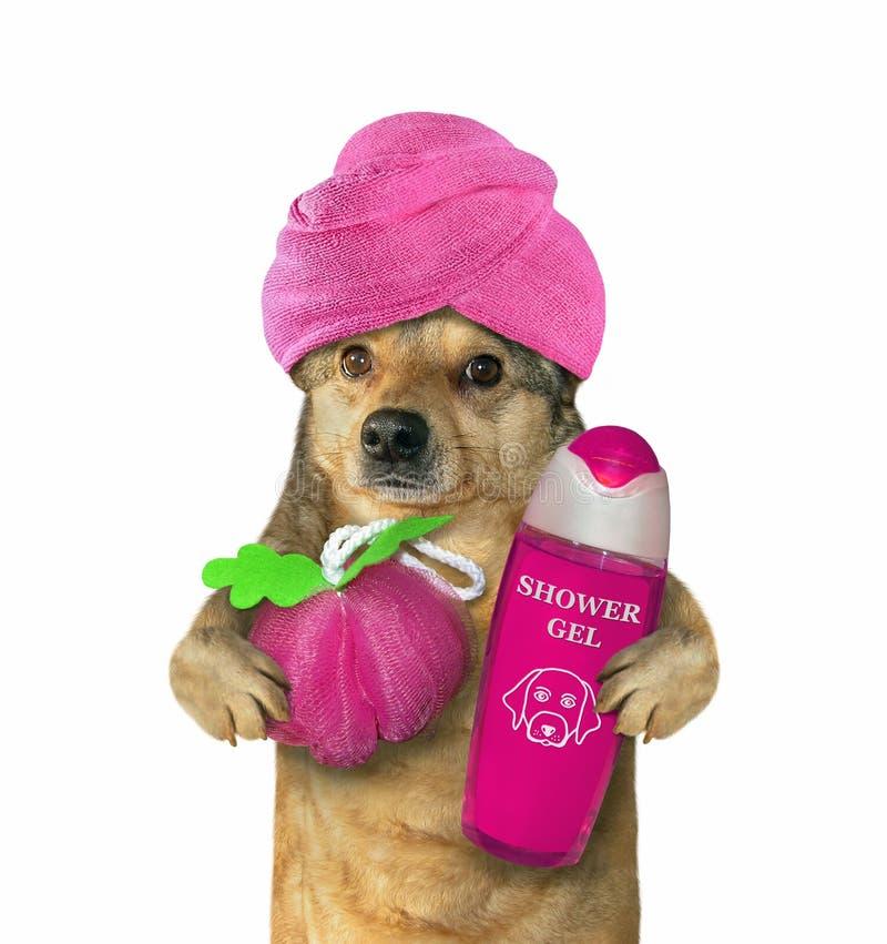 Hund im Turban nach Dusche 3 lizenzfreie stockbilder
