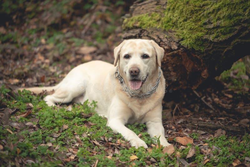 Hund im Wald lizenzfreie stockfotografie