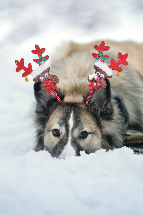 Hund im Winterpark stockfoto
