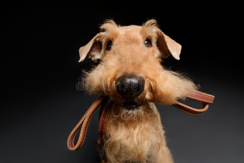 Hund ist Ihr bester Freund lizenzfreie stockfotos