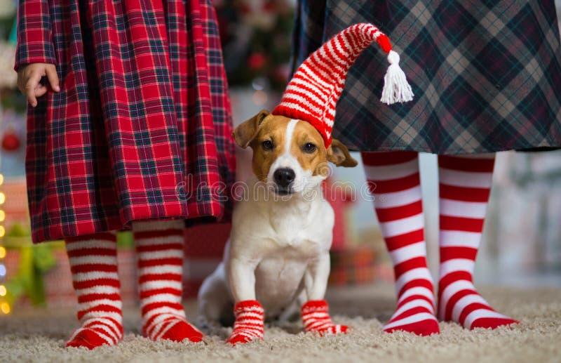 Hund Jack Russell Terrier och ben kvinna och liten flicka i rött arkivbilder