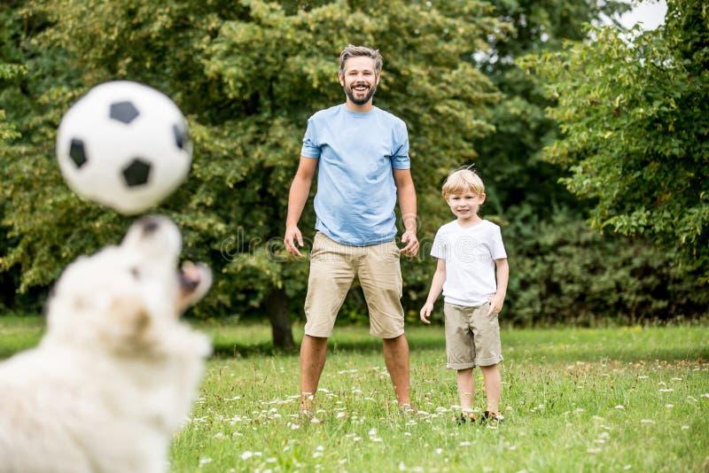 Hund jongliert Fußball mit Nase stockbilder