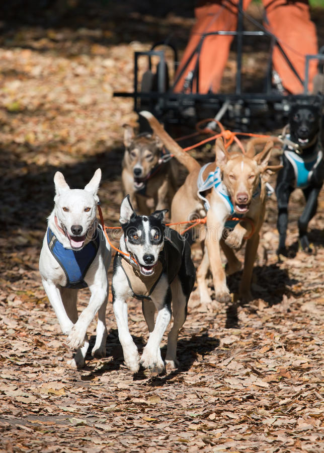 Hund-Karren stockfotos