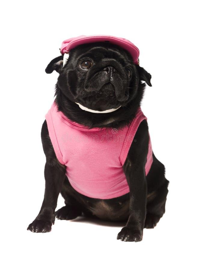 hund klädd pink royaltyfri bild