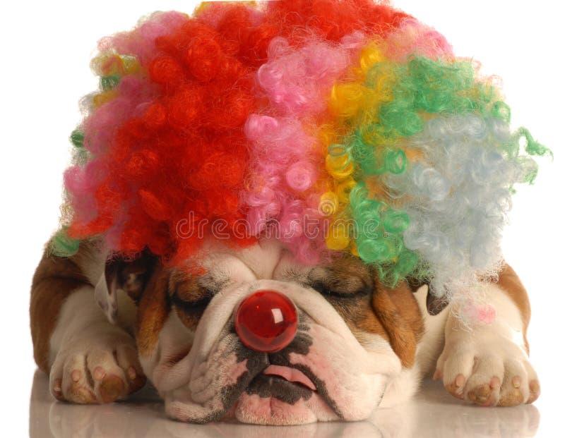 Hund kleidete oben als Clown an stockfotos