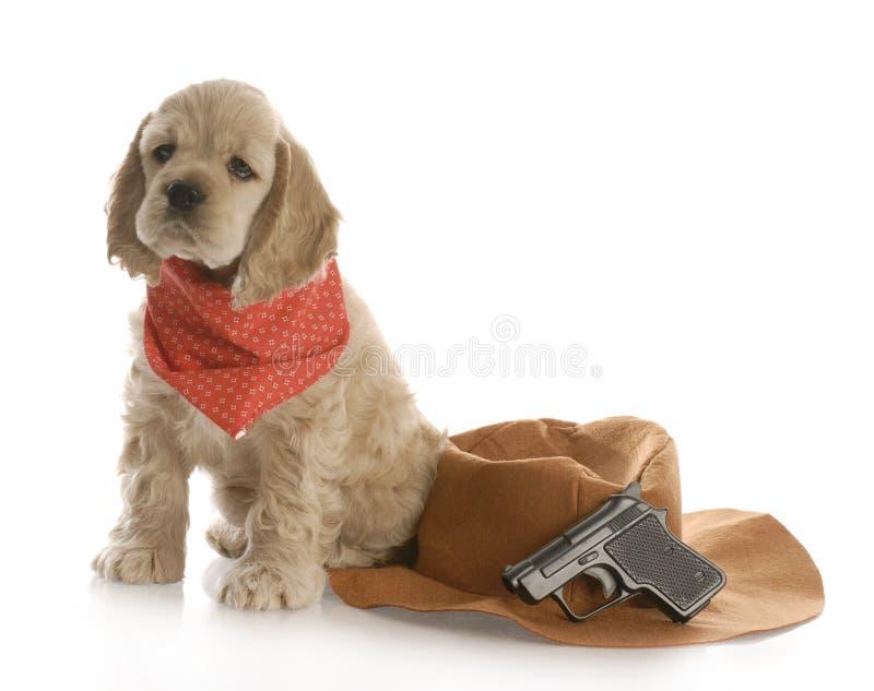 Hund kleidete oben wie ein Cowboy an lizenzfreies stockbild