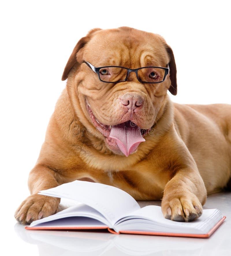Hund läst bok. isolerat royaltyfria bilder