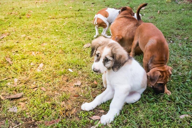 hund little arkivbilder