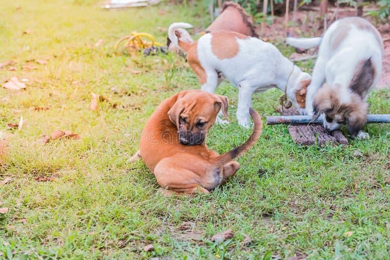 hund little royaltyfri fotografi