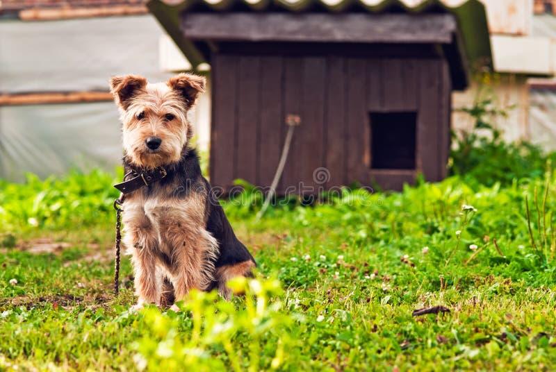 hund little som är SAD arkivbild