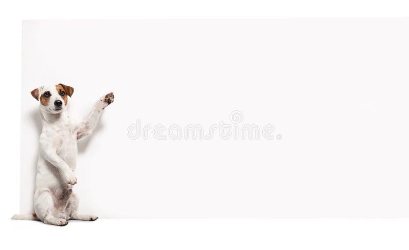 Hund med banret fotografering för bildbyråer