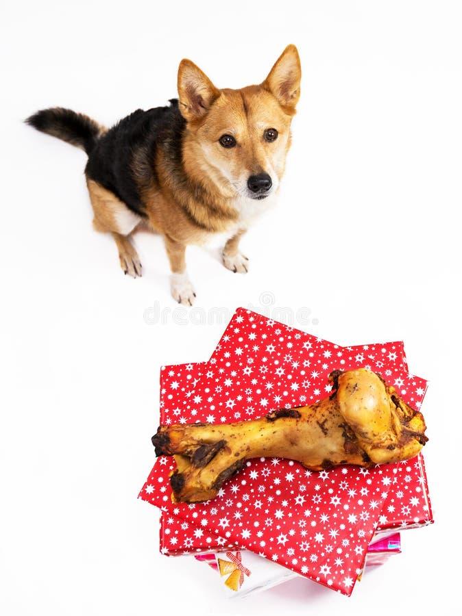 Hund med bengåva royaltyfri bild