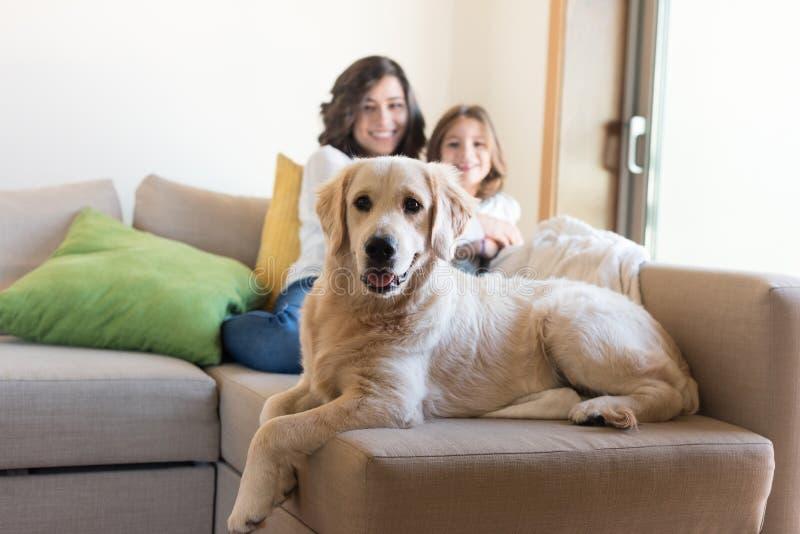 Hund med den hemmastadda mänskliga familjen royaltyfri bild
