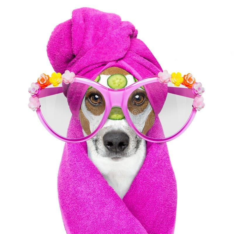 Hund med en brunnsort för skönhetmaskeringswellness royaltyfria foton