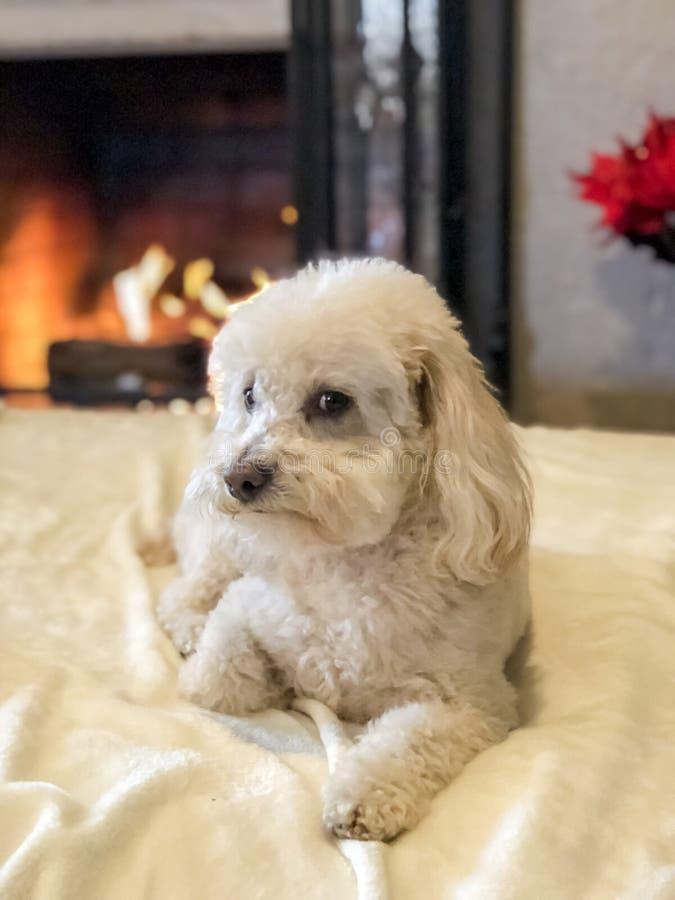 Hund med en förvirrad blick arkivfoto