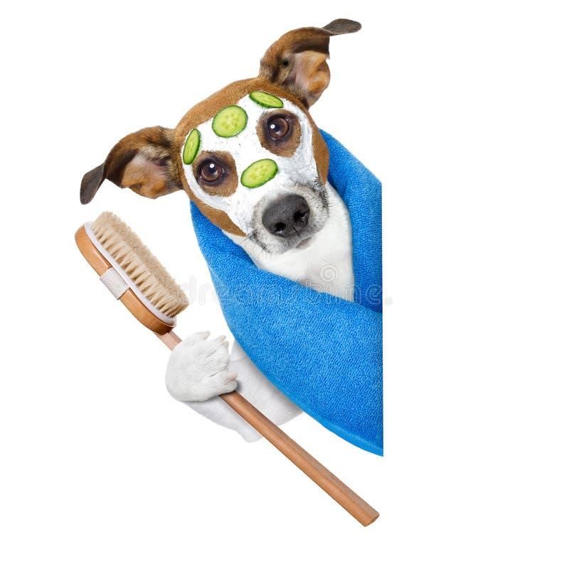 Hund med en skönhetmaskering arkivbild