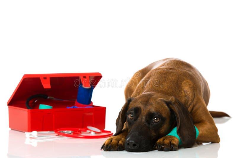 Hund med första hjälpensatsen arkivfoton
