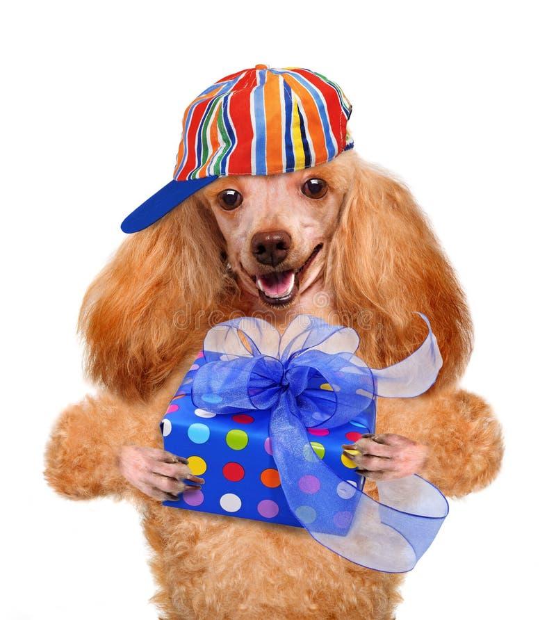 Hund med gåvaasken arkivfoton