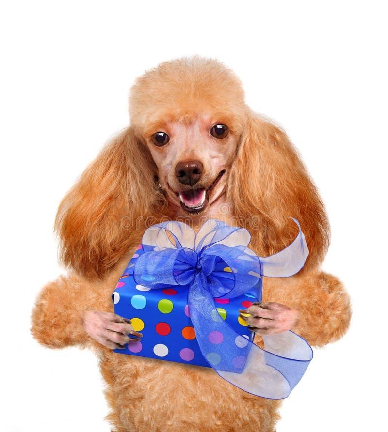 Hund med gåvaasken arkivfoto