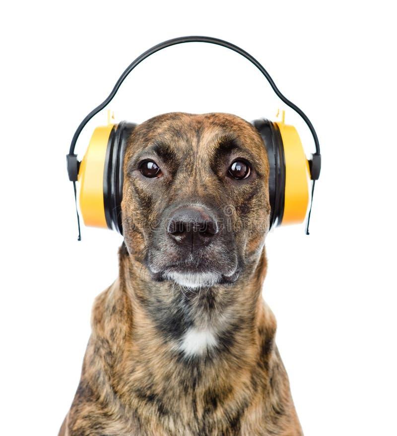 Hund med hörlurar för öraskydd från oväsen Isolerat på vit fotografering för bildbyråer