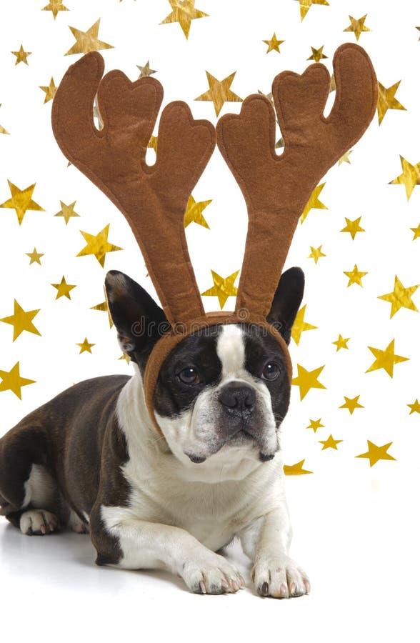 Download Hund Med Horn På Kronhjort På Jul Fotografering för Bildbyråer - Bild av claus, festligt: 27288611