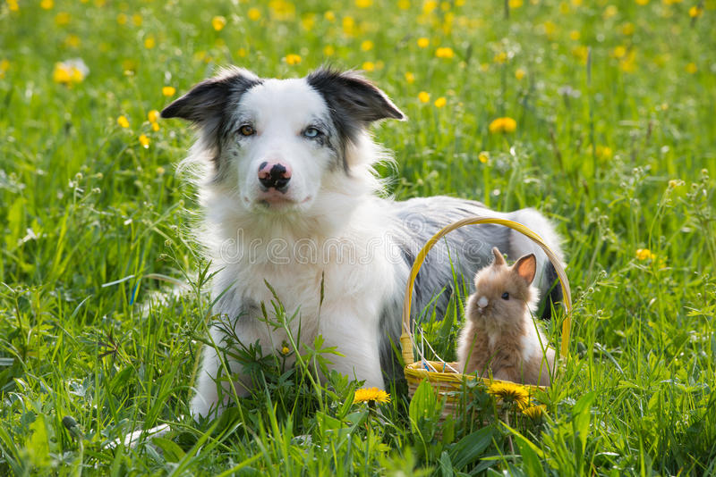 Hund med kanin fotografering för bildbyråer