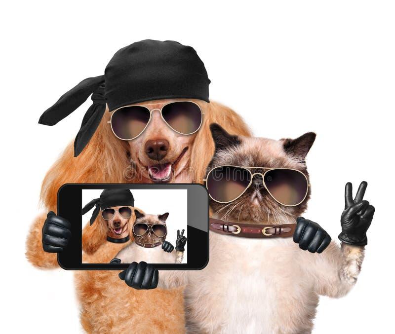 Hund med katten som tar en selfie samman med en smartphone royaltyfri fotografi