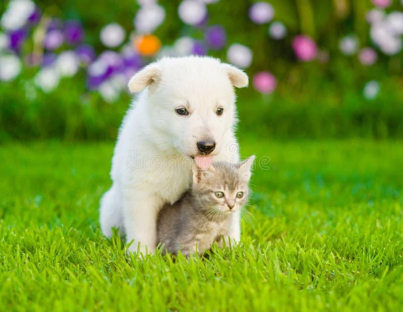 Hund med katten som tillsammans sitter på grönt gräs arkivbild
