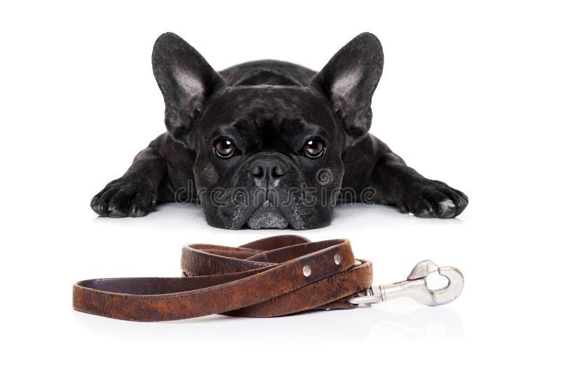 Hund med koppeln royaltyfri foto