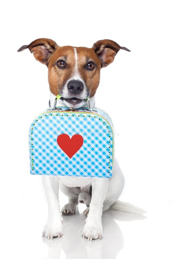 Hund mit Beutel stockbilder