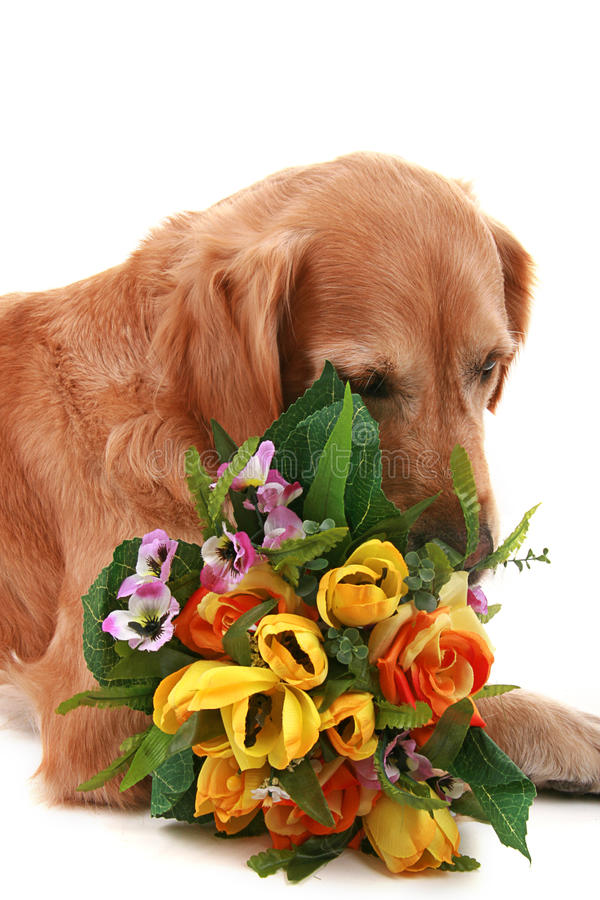 Hund mit Blumen stockfoto