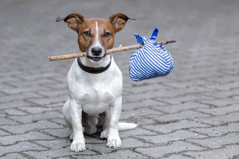 Hund mit einem blauen Beutel stockbild