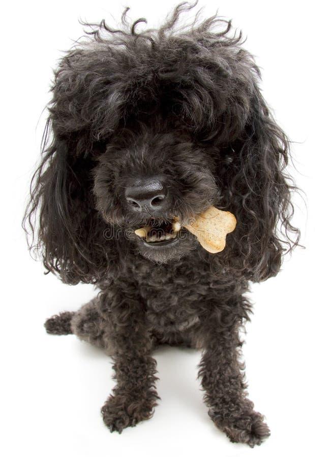 Hund mit einem Knochen stockbild
