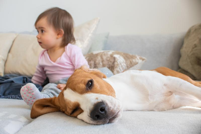 Hund mit einem netten Baby auf einem Sofa Spürhund, der auf Seite, Baby im Hintergrund schaut linke Seite schläft stockbilder