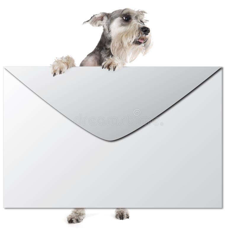 Hund mit einem Umschlag stockfotos